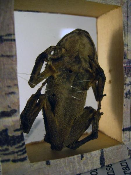 Alicia Bailey Frog box in progress