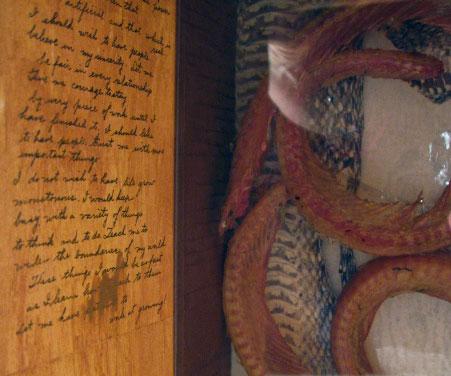Alicia Bailey Snake Box detail