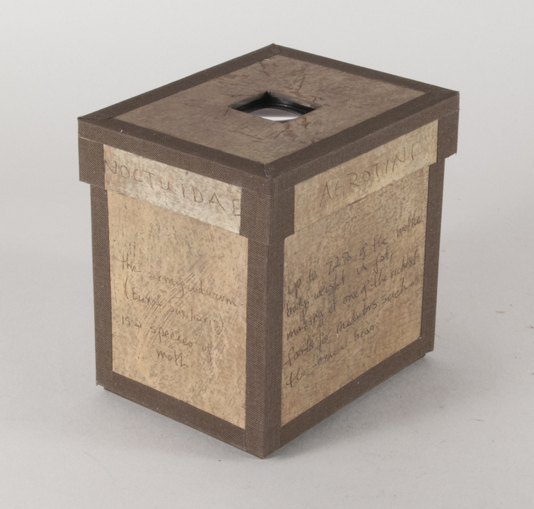 Euxoa Auxiliaris Box